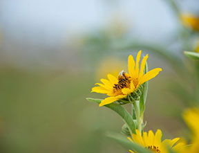 Preserving prairie ecosystems